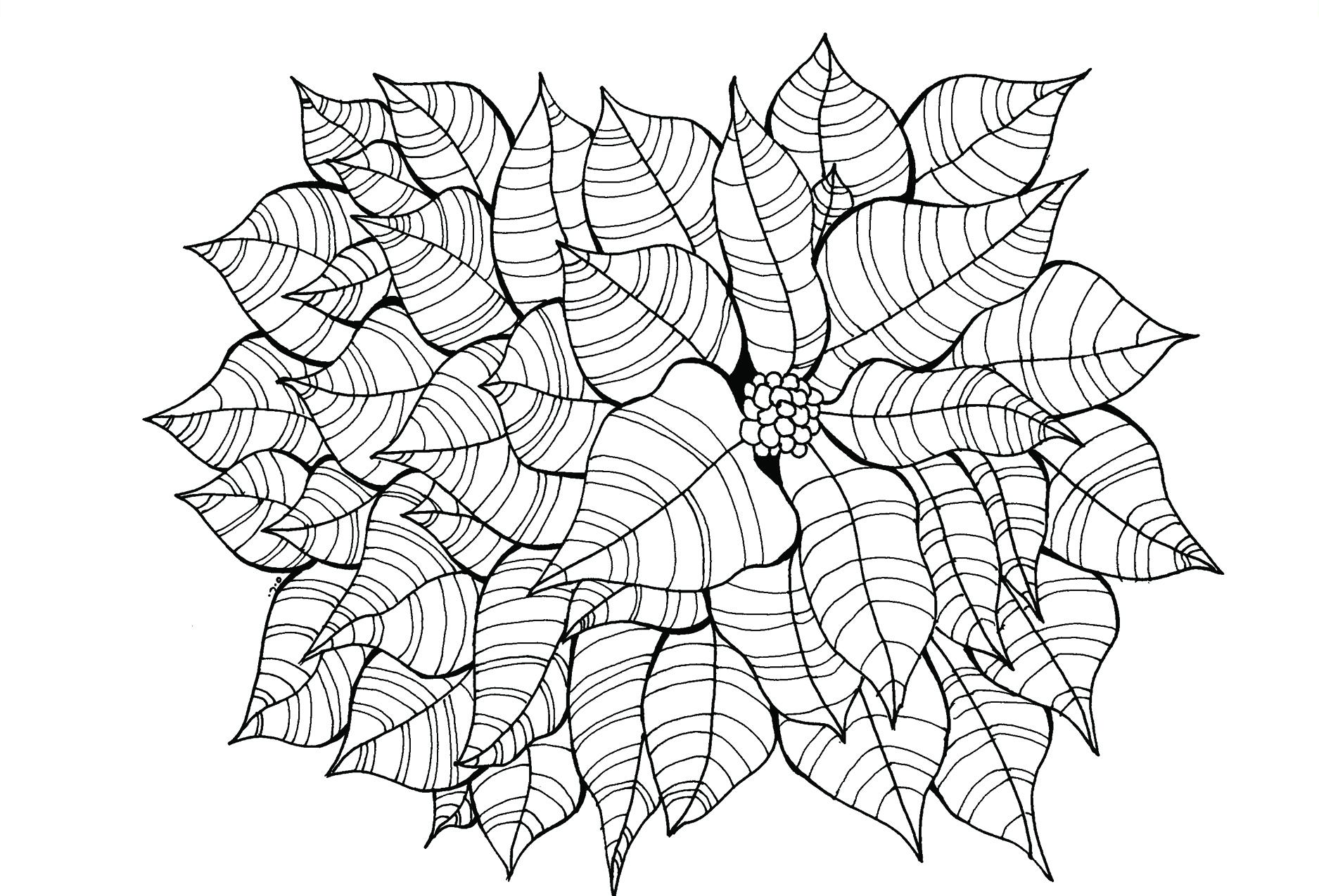 Flower3_front.jpg