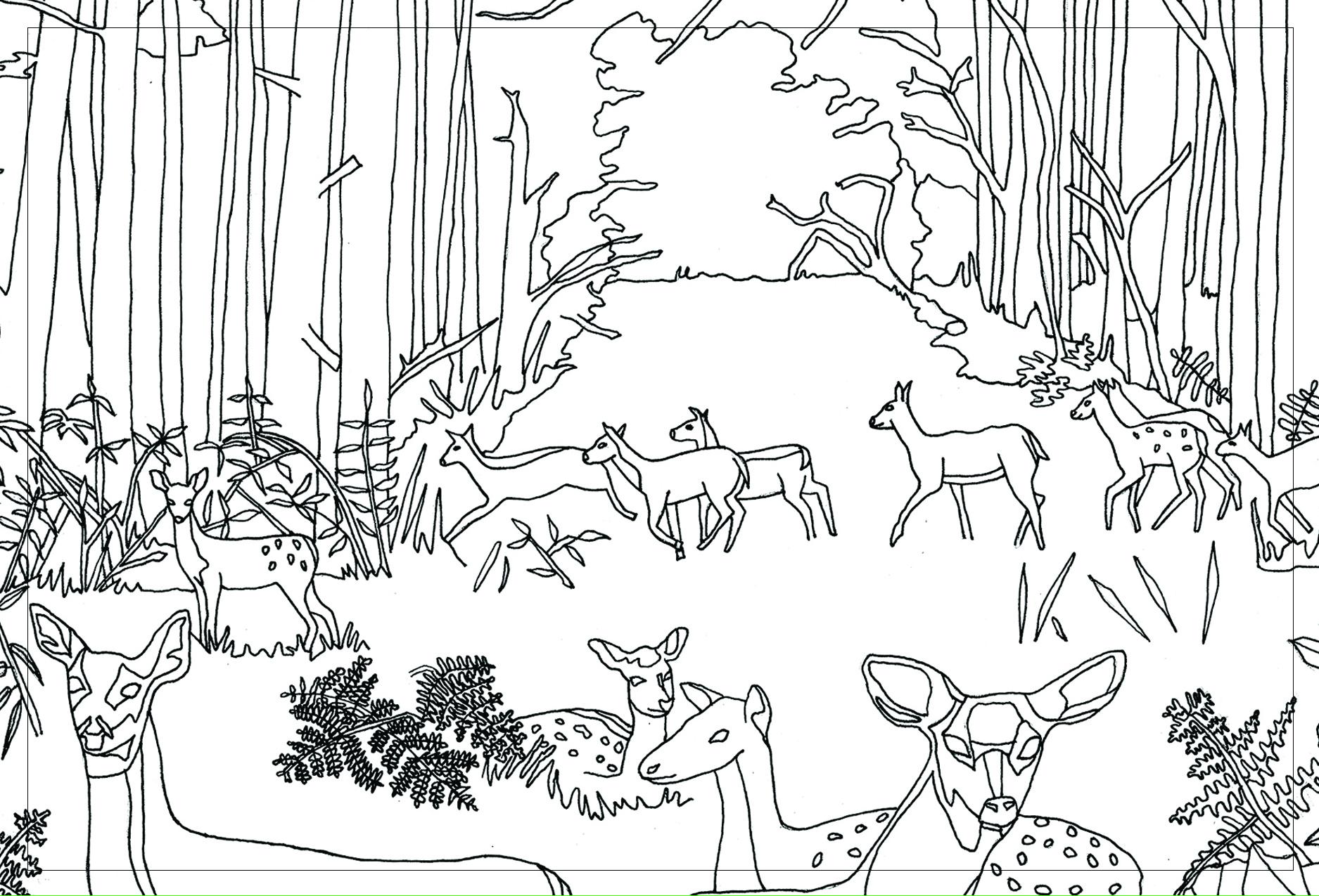 Deer_Front.jpg