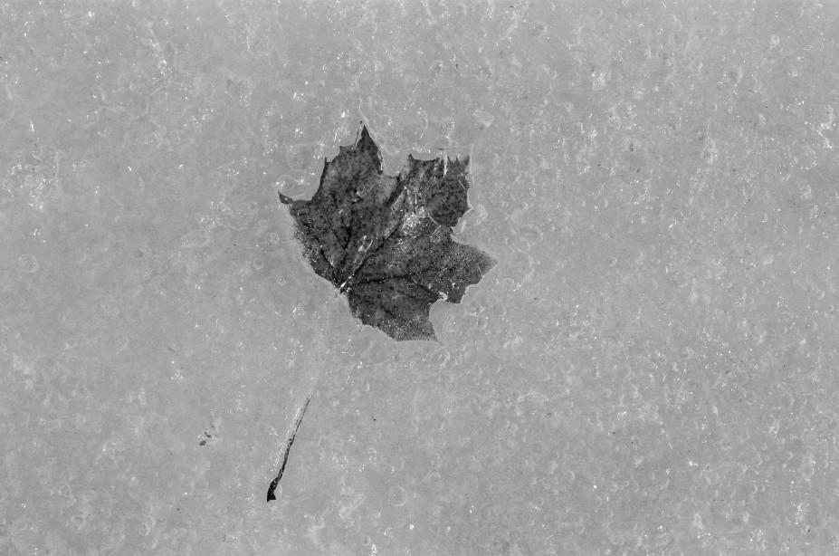Black&White-18.jpg