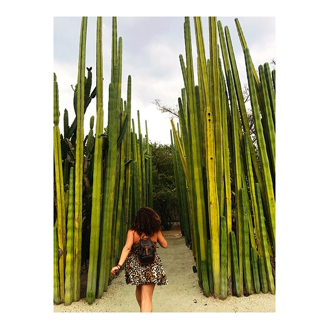 Hope you are content with this content ✌️🌵🇲🇽 #contentqueen #oaxaca #mexico