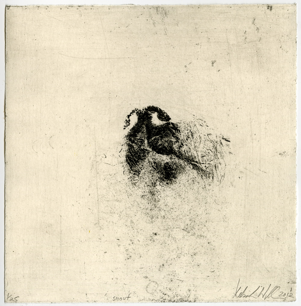 Deborah Williams,  Snout  , etching, 19.5 x 19 cm, 2012
