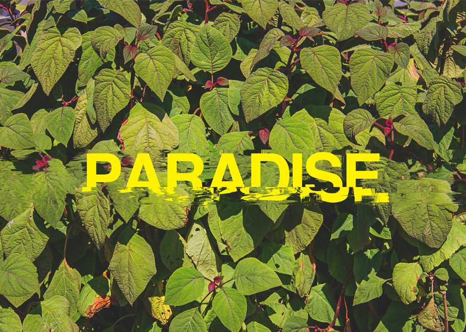 Matto Lucas,  Welcome to Paradise , 2014