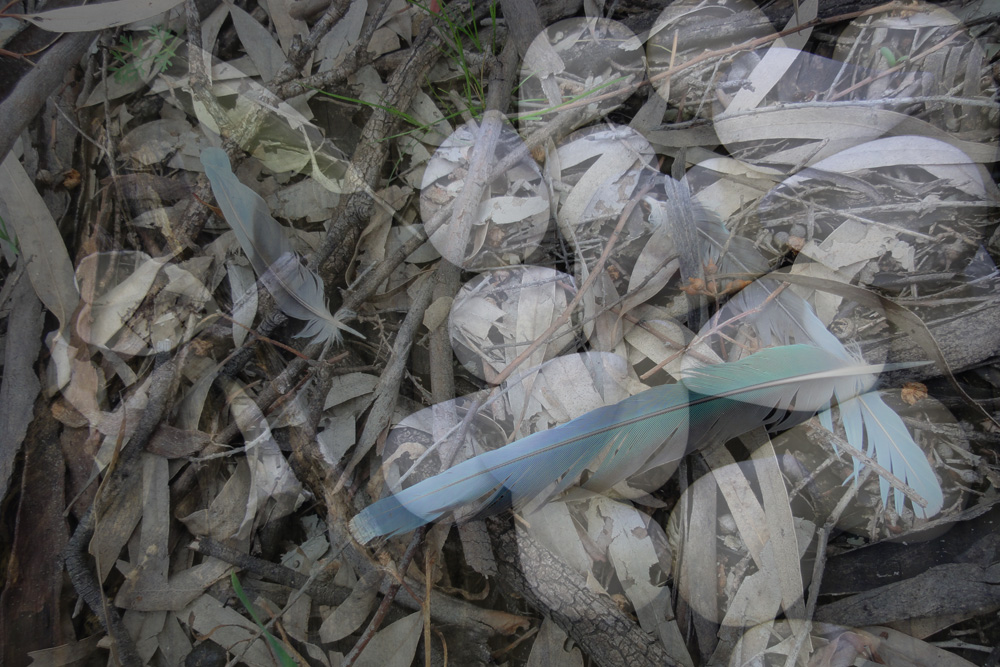 Sally Cleary,  Blue Feather , 2011, Digital photograph
