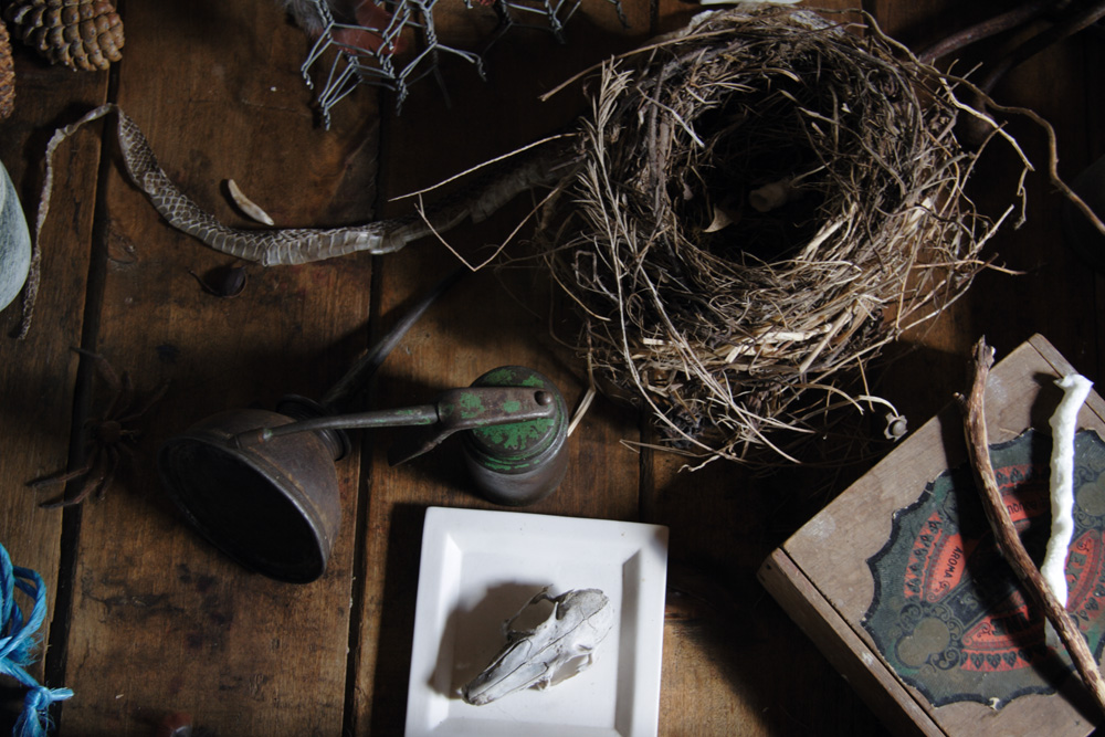 Sally Cleary , Nest #3  (assemblage detail), 2011, digital photograph