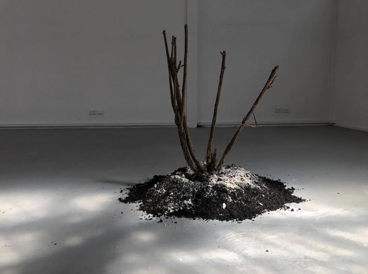 Avan Anwar,  The Value of Bing , 2018, plaster, soil and rose bush. Dimensions variable.
