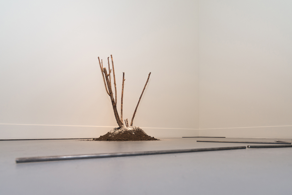 Avan Anwar,  The Value of Bing , 2018, plaster, soil and rose bush, dimensions variable  Clara Murphy,  Untitled , 2018, steel rods and paper