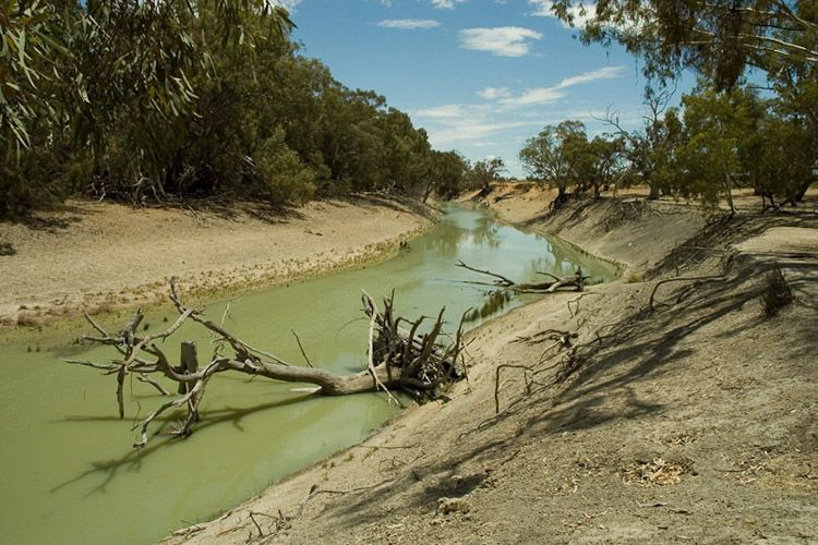 Darling River 2934.jpg