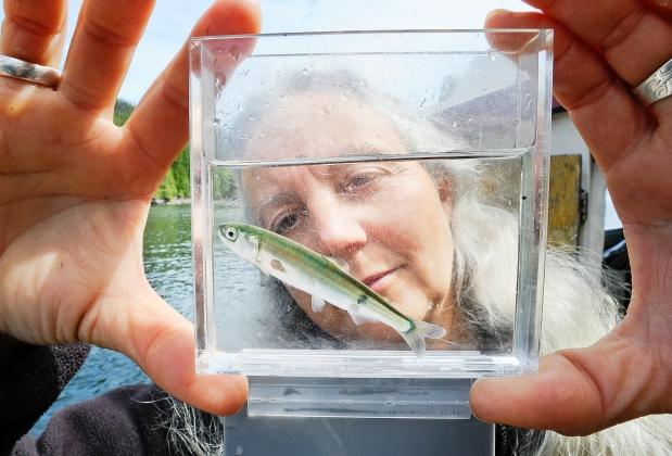 Alex Sea lice.jpg
