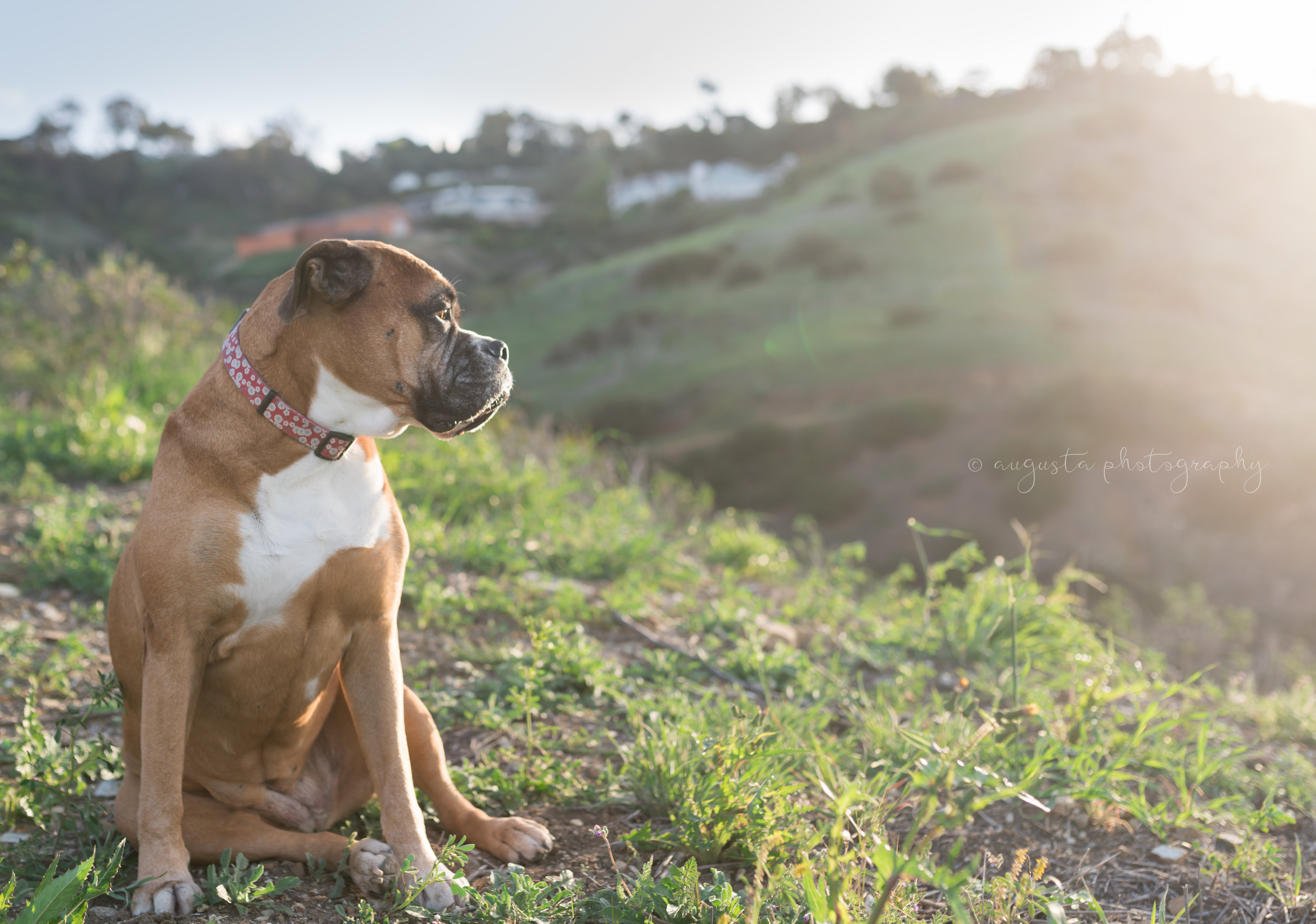 Kirra Mae | My Road Dog, Car Trip Partner, Expert Poser and Adventure Buddy