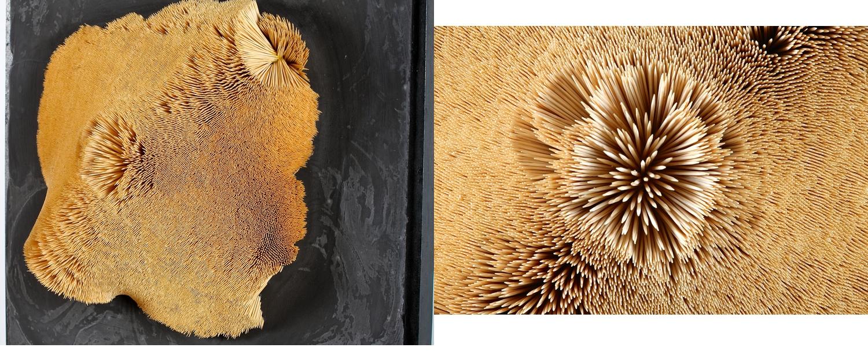 Raie Manta  — 68 x 68 cm — Cure-dents, ciment.