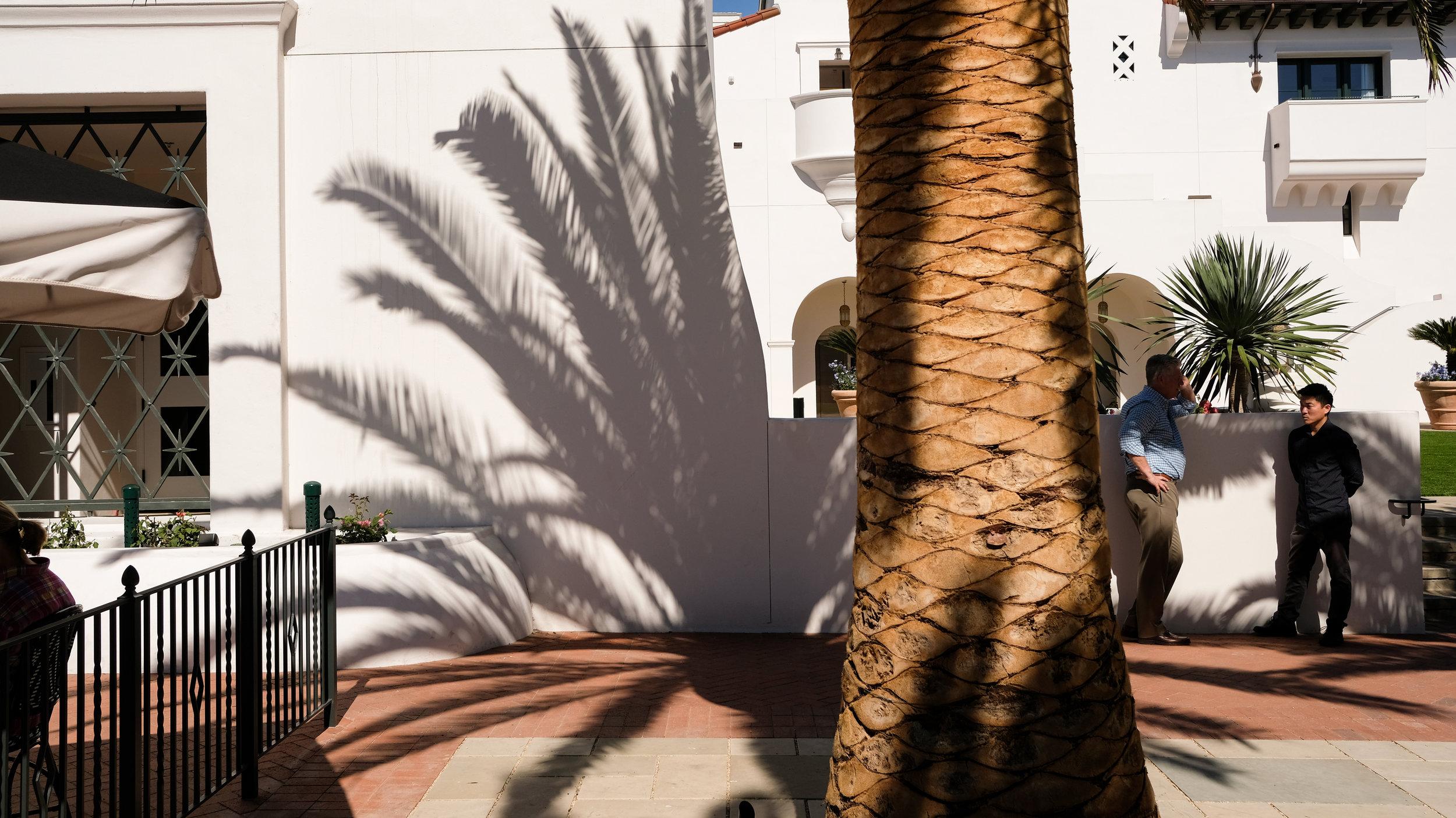 19_SANTA_BARBARA_palmtree.jpg
