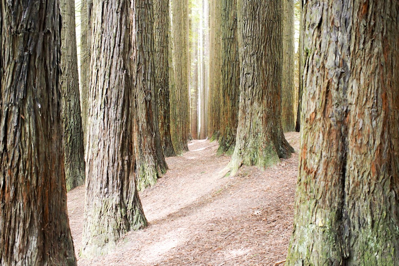 150504_Redwoods2.jpg