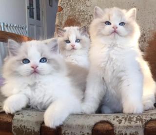 babies!!.jpg