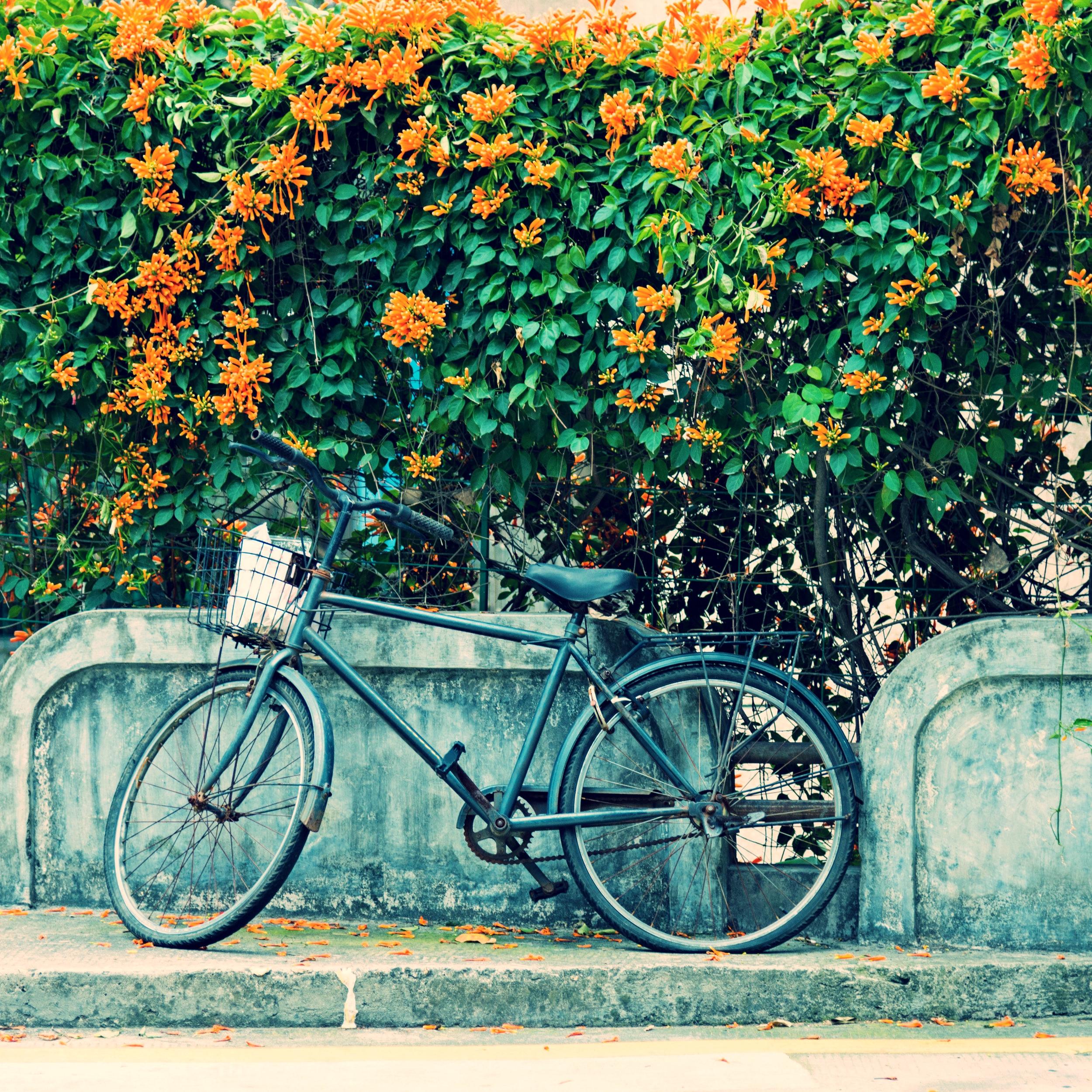 """"""" La vie est plus belle à vélo ! """""""