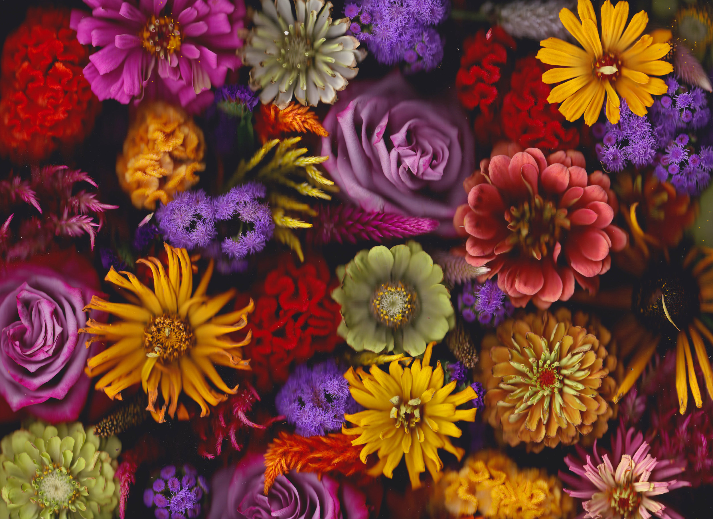 flowerscanaug2418.jpeg