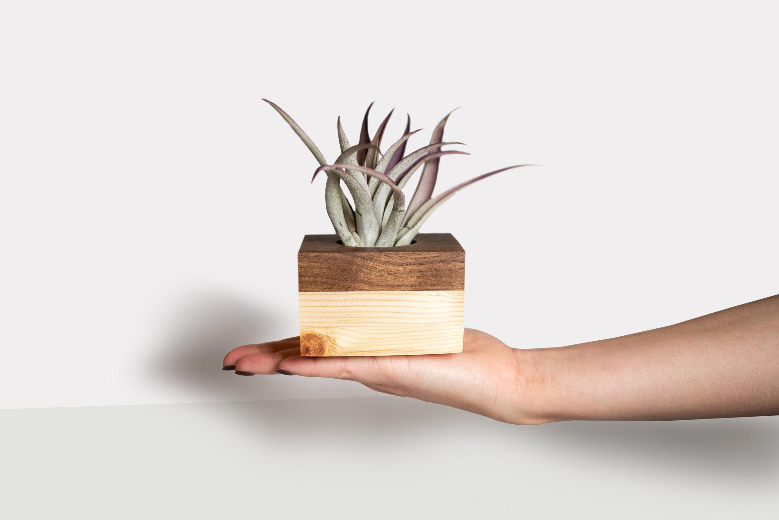 Walnut Pine Cube Planter by Botanicool