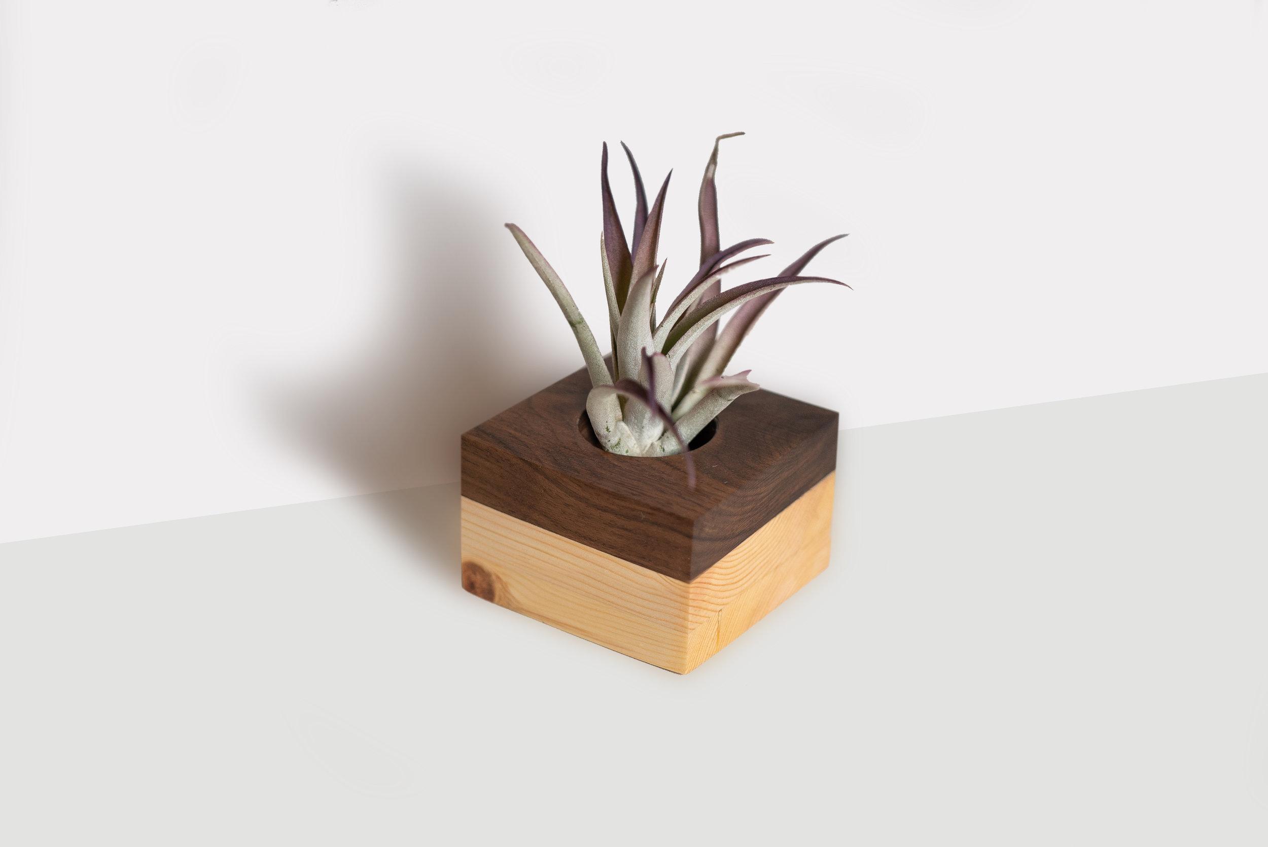 Walnut and Pine Cube Planter by Botanicool