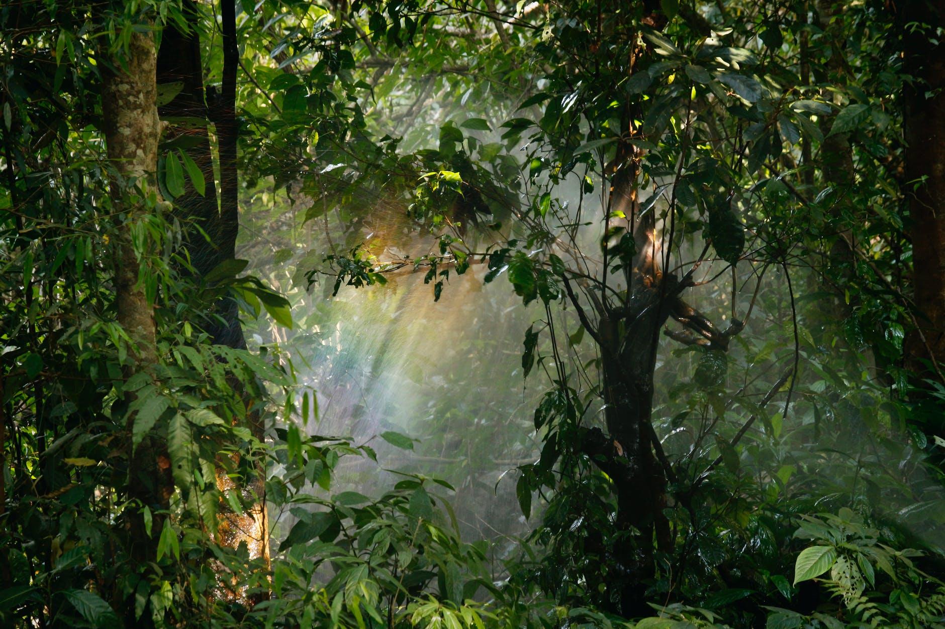 Cabify-carbon compensation.Forest.jpeg