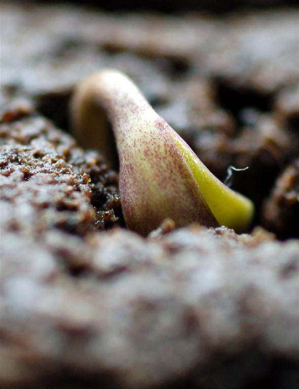 Plant birth