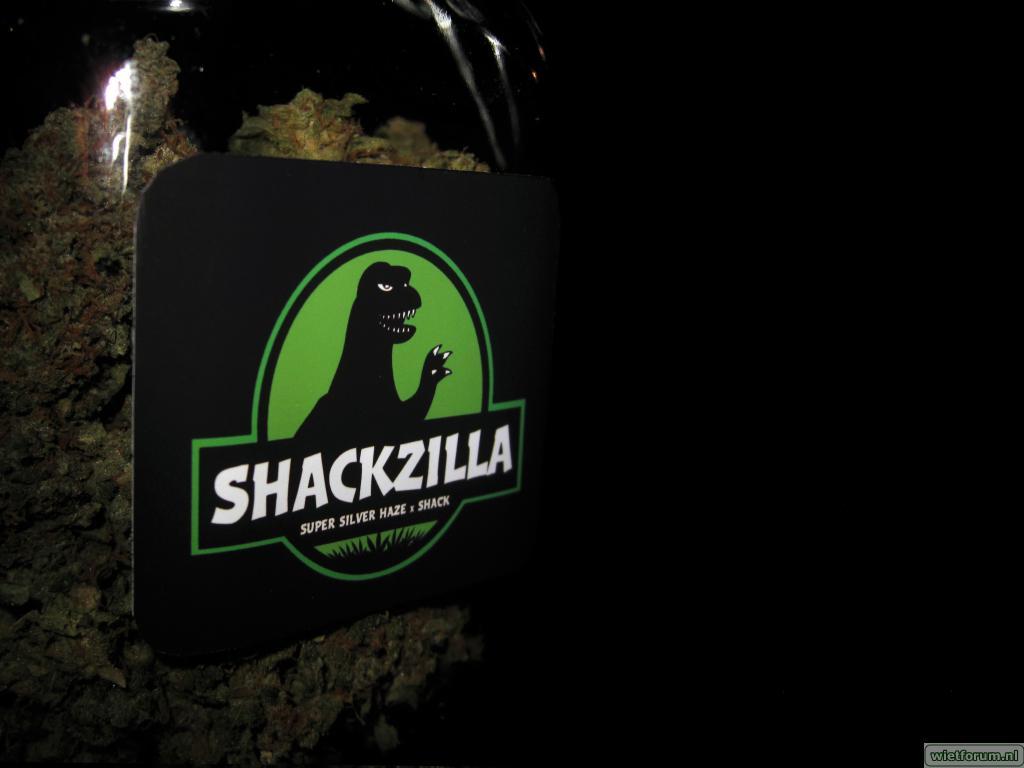 shackzilla-elandy-13.jpg