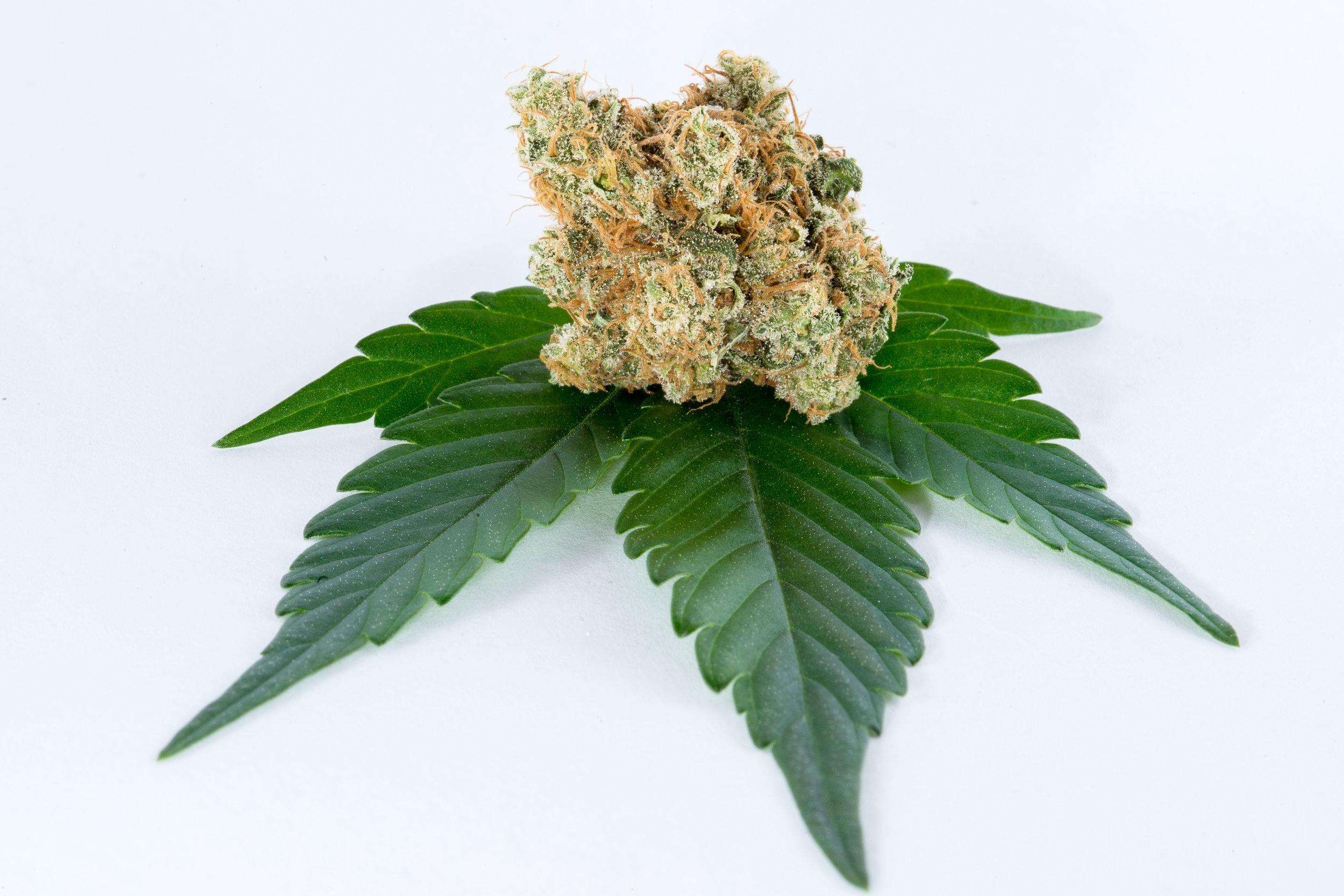 cannabis-art-1354.jpg