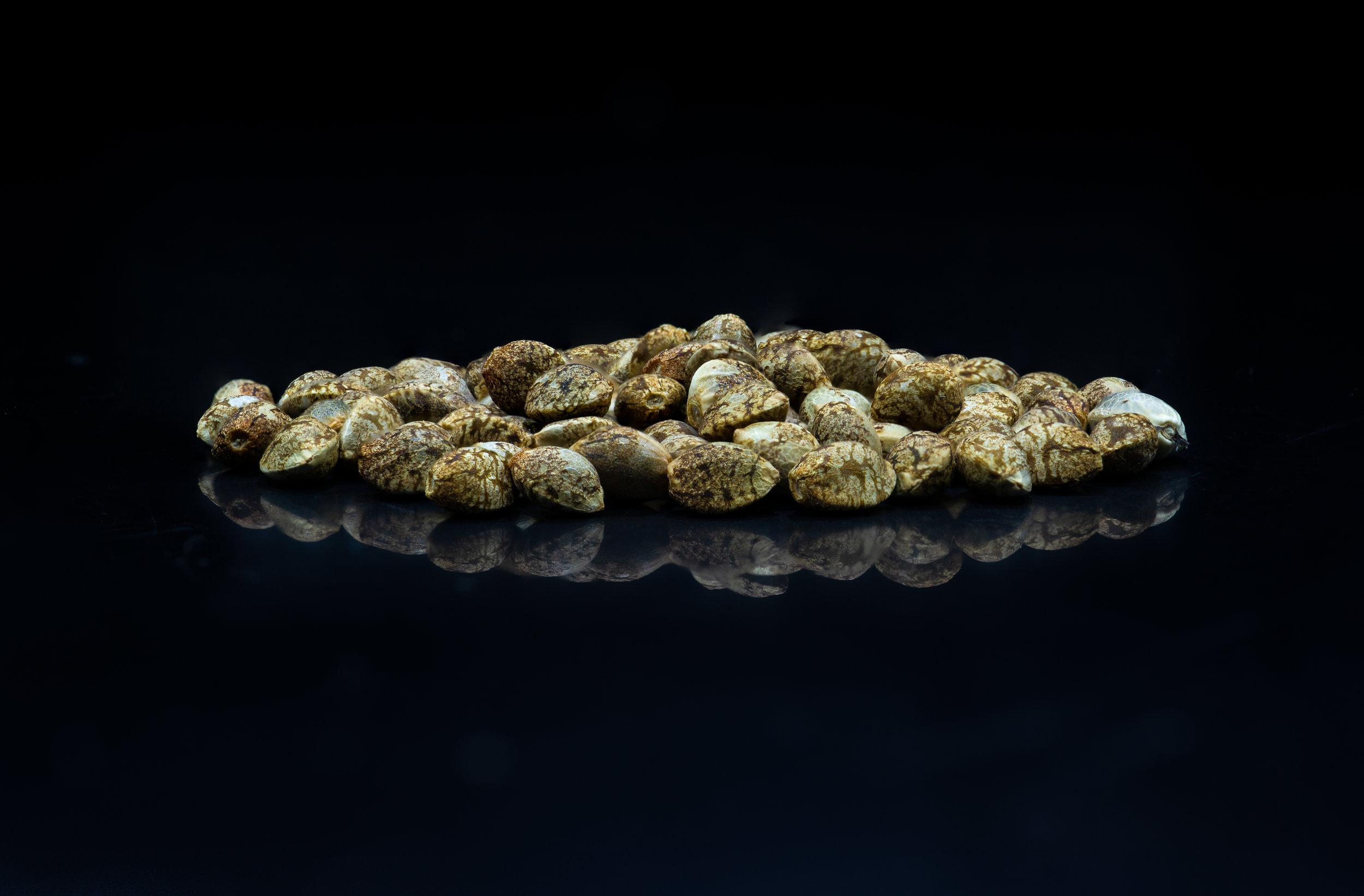 Island of seeds