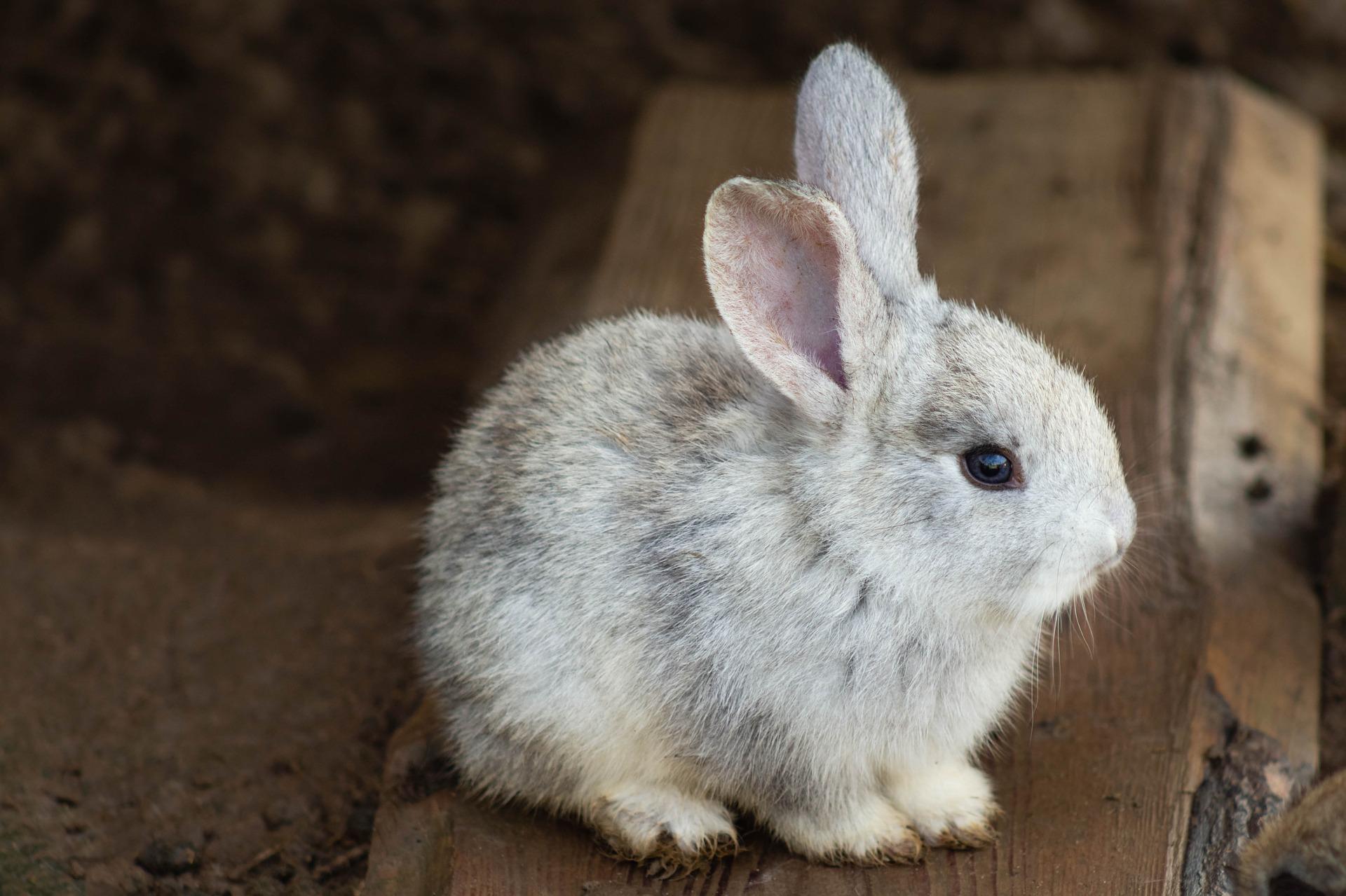rabbit-3578422_1920.jpg