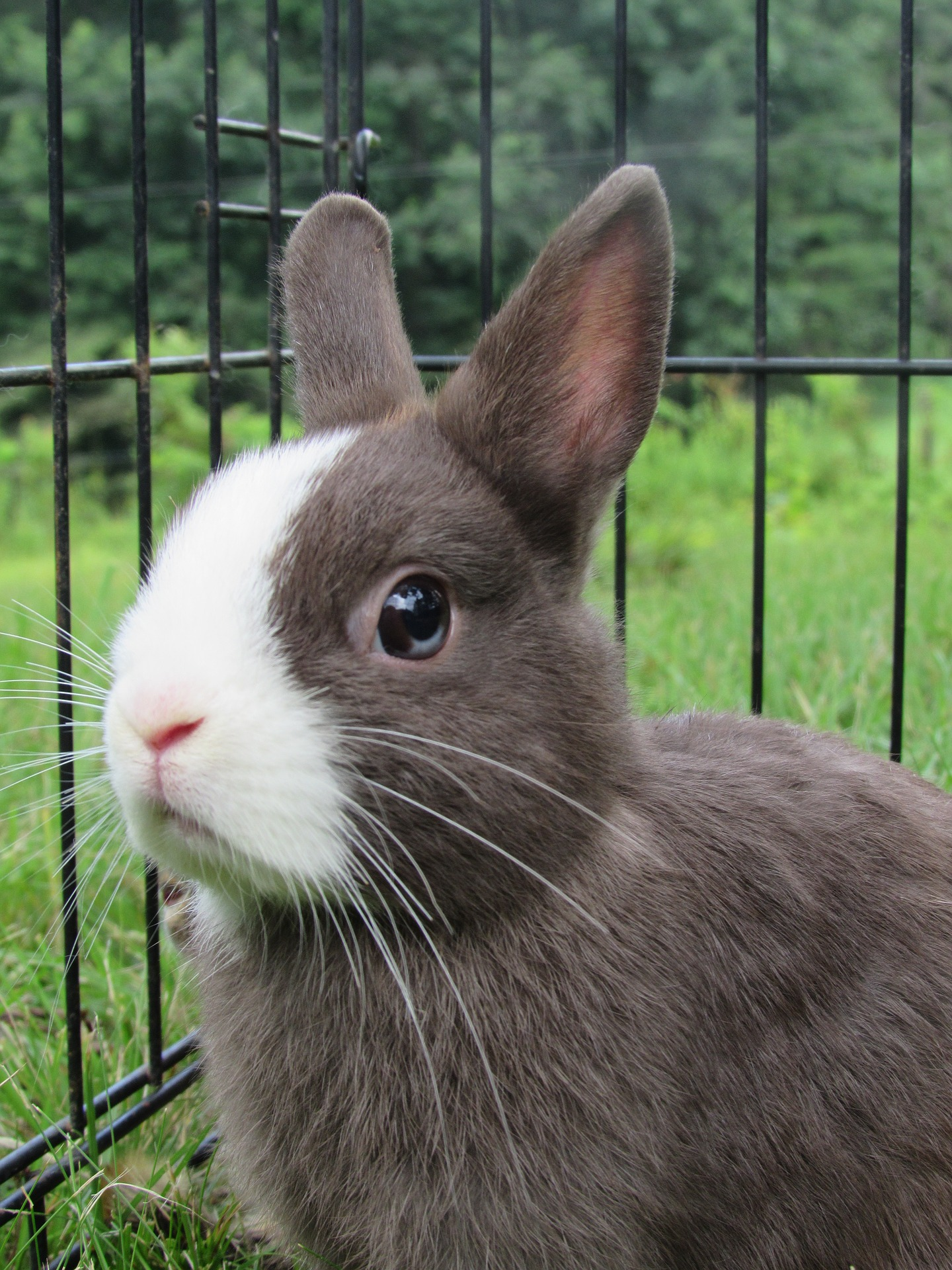 rabbit-2502615_1920.jpg