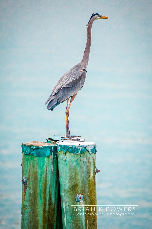 Florida-Mediera Beach 012
