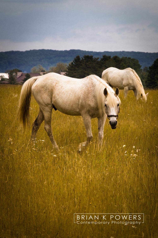 Boyne_City_Michigan_Michigan_horses_001