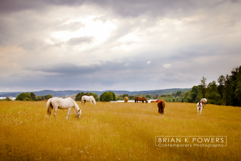 Boyne_City_Michigan_Michigan_horses_002