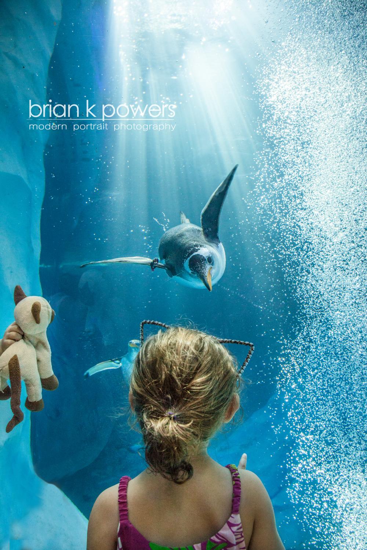 Brian K Powers Photography Penguins Detroit Zoo 003-2.jpeg