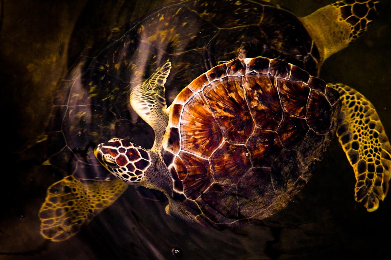Brian_K_Powers_Photography_Animals_108.jpg