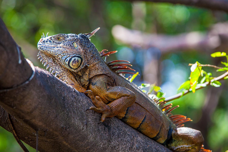 Brian_K_Powers_Photography_Animals_260.jpg