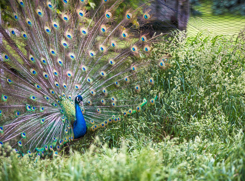 Brian_K_Powers_Photography_Animals_671.jpg