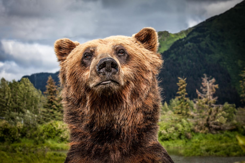 Brian_K_Powers_Photography_Animals_1026.jpg