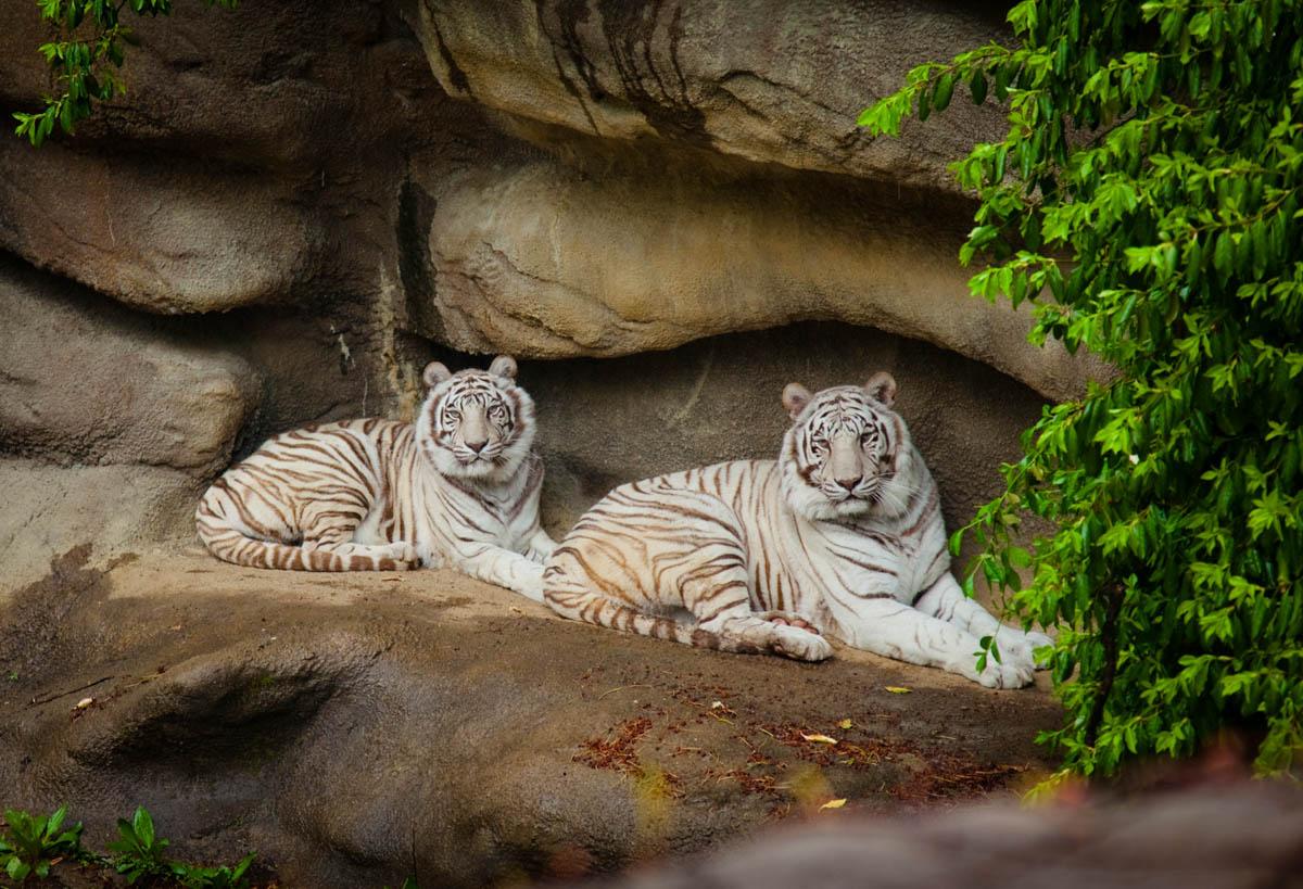 Brian_K_Powers_Photography_Animals_116.jpg