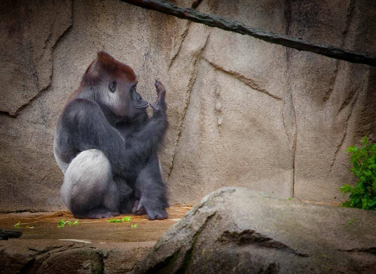 Brian_K_Powers_Photography_Animals_120.jpg