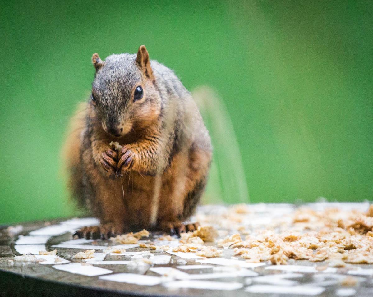 Brian_K_Powers_Photography_Animals_802.jpg