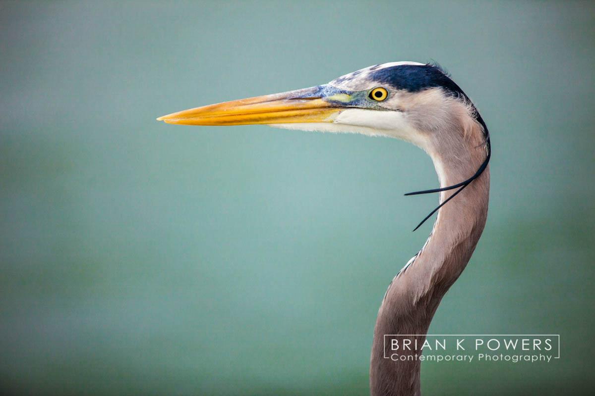 Brian_K_Powers_Photography_Animals_935.jpg