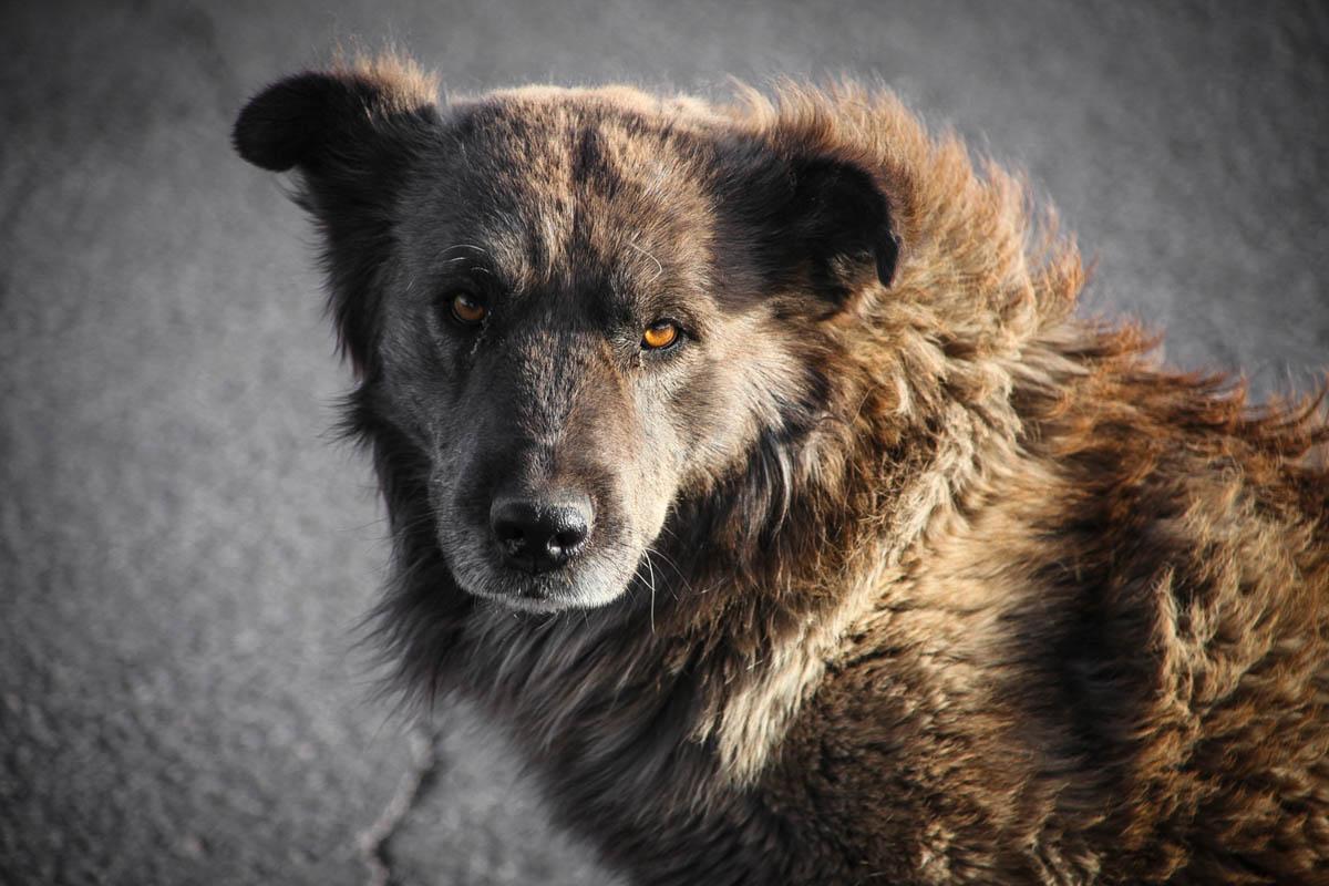 Brian_K_Powers_Photography_Animals_1020.jpg