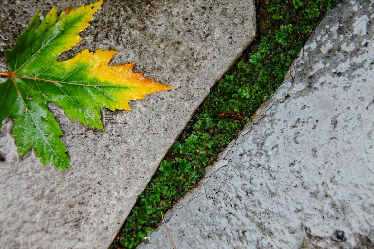 Brian_K_Powers_Photography_Nature_090.jpg