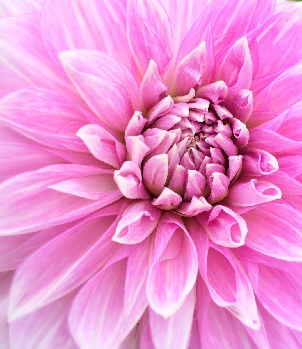 Brian_K_Powers_Photography_Nature_159.jpg
