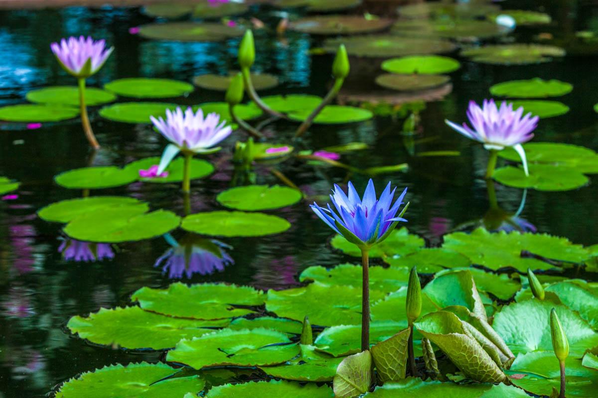 Brian_K_Powers_Photography_Nature_233.jpg