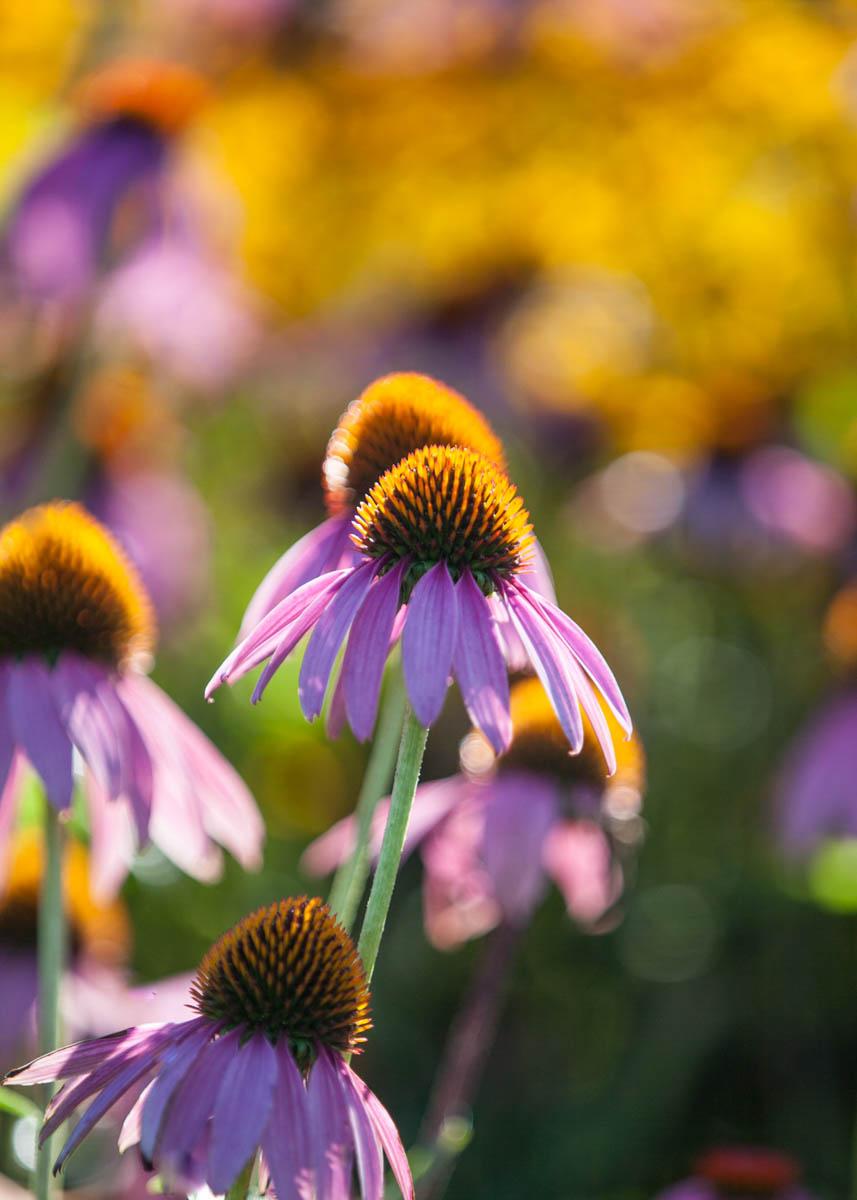 Brian_K_Powers_Photography_Nature_406.jpg