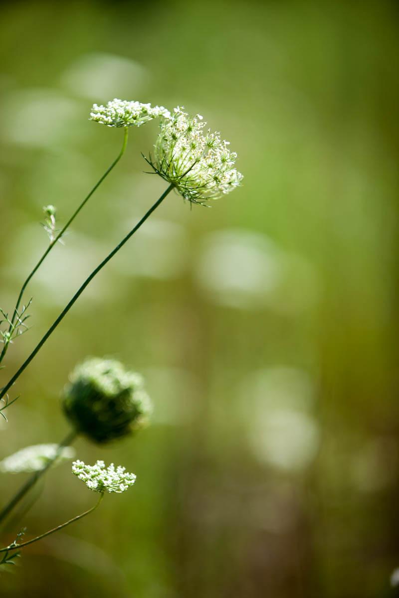 Brian_K_Powers_Photography_Nature_412.jpg