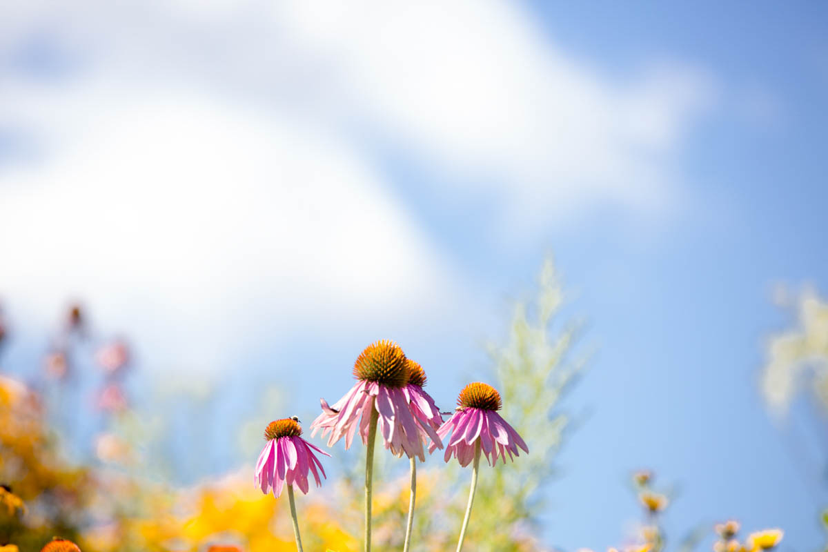 Brian_K_Powers_Photography_Nature_417.jpg