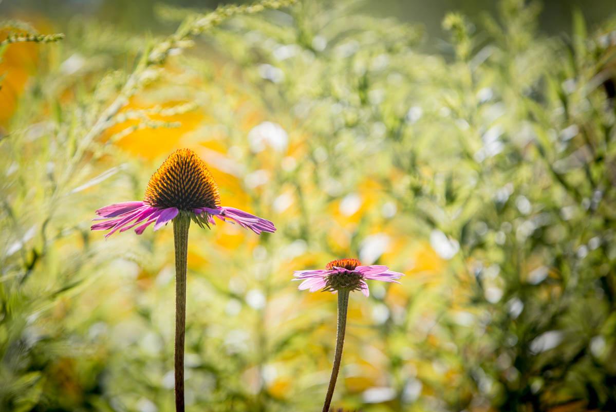 Brian_K_Powers_Photography_Nature_420.jpg