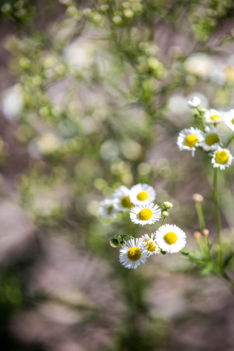 Brian_K_Powers_Photography_Nature_421.jpg