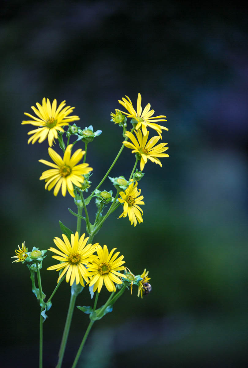 Brian_K_Powers_Photography_Nature_422.jpg
